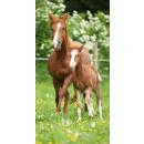 groothandel Bad- & handdoeken: handdoek jeugdstrand 140x70 paarden katoen