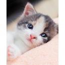 Microflane per gattini Coperta (Tabby)
