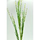Grosshandel Pflanzen & Töpfe: Silk  Blumen-Dekoration 40cm