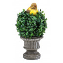 wholesale Plants & Pots: Boxwood in a pot with a bird height of 25cm.