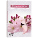 Scented candles, tealight; Plum blossom 6p.