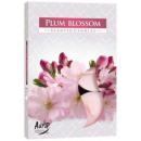 Candele profumate, tealight; Fiore della prugna 6p