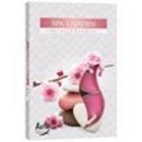 grossiste Bougies & bougeoirs: Bougies parfumées,  photophores; SPA Jardin 6p.
