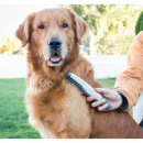 Electric comb and knots for dogs