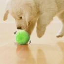 nagyker Kert és barkácsolás: Mágikus labda házi kedvenceknek