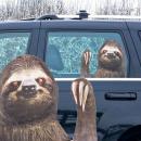 Großhandel KFZ-Zubehör:Sloth Auto Aufkleber