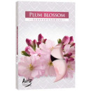 Scented candles, tealight: flower plum