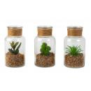 groothandel Woondecoratie: Glazen fles met cactus h = 13cm d = 7cm, 3 keer so