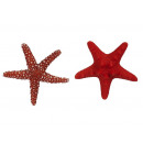 wholesale Gifts & Stationery: Magnet starfish made of poly, 6 cm