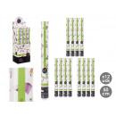 cannon confetti euros 50 cm