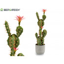 prickly pear cactus pink flower 78cm