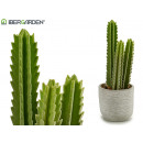 high spined plastic cactus 33cm