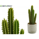 cactus cactus high thorns 39cm