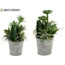 doniczkowe rośliny kaktusowe okrągłe mieszany 2