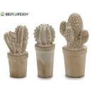 cactus en pierre blanchie 3 fois assorti