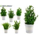 Busch c weiße Topfpflanzen 6 fach sortiert