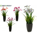 pot plant flowers assorted 4col17x17x52cm