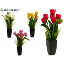 plant pot tulip, colors 4 times assorted