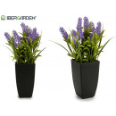 lavender with plastic pot 35 cm high