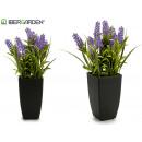 groothandel Tuin & Doe het zelf: lavendel met plastic pot 35 cm hoog