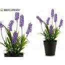 grossiste Plantes et pots: lavande avec pot en plastique de 32 cm de haut
