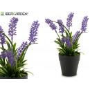 Großhandel Garten & Baumarkt: Lavendel mit Plastiktopf 22 cm hoch