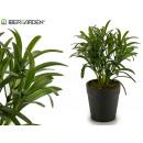 groothandel Tuin & Doe het zelf: dunne bladplant met plastic pot