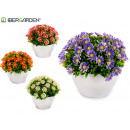 Gänseblümchen blüht Pflanze, Farben 4 fach sortier