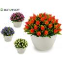 Pflanze spitze Blüten, Farben 4 fach sortiert
