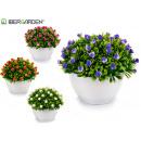 Pflanze rosa Blüten, Farben 4 fach sortiert