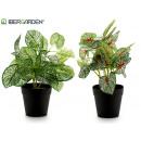 wholesale Artificial Flowers: artificial plant 27cm white 2 times assorted