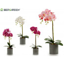 gray round potted orchid 51cm assorted 4c