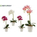 wholesale Artificial Flowers: white conic potted orchid 51cm assorted 4c