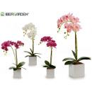 Orchidée blanche en pot de 51cm assorti 4c