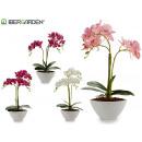 47 cm biała owalna orchidea doniczkowa mieszany 4c