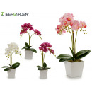 wholesale Artificial Flowers: 50cm white square pot orchid assorted 4c