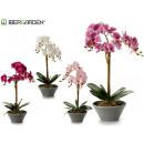 wholesale Artificial Flowers: orquidea conica large gray 58cm 4col