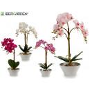 wholesale Artificial Flowers: orquidea large white conical pot 58cm 4c