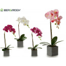 43cm gray square pot orchid assorted 4cl
