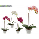 wholesale Artificial Flowers: white conical pot orchid 43cm assorted 4cl