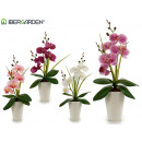37cm white conical pot orchid assorted 4cl