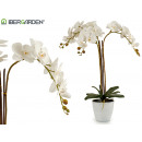 white orchid white conic flowerpot jumb