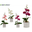 small white square flower pot orchid assorted 4c