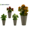 flowerpot conica gray plant assorted colors