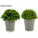 mayorista Alimentos y bebidas: maceta gris hojas cortas 2 modelos