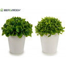 wholesale Food & Beverage: white flowerpot short leaves 2 models