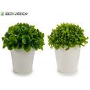nagyker Élelmiszer- és élvezeti cikkek: fehér virágcserép rövid levelek 2 modell