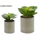 plant pot elongated leaf colors 2 times assorted