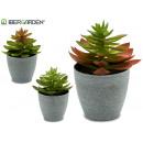 flowerpot plant round leaf tip 3 colors