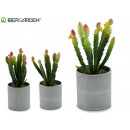 flowerpot cactus wide small colors 3 times assorte